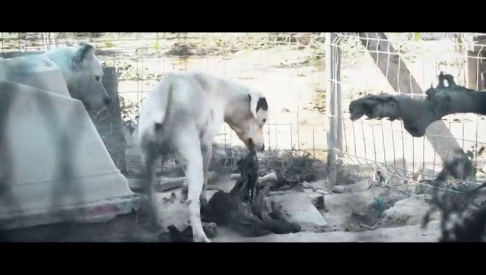 Perros hacinados, sin agua y alimentándose de otros animales muertos