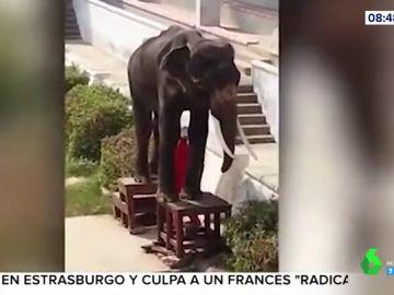 Una elefanta esquelética obligada a realizar números circenses en un zoo de Tailandia