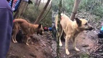 Unos ciclistas rescatan a un perro abandonado en Portugal
