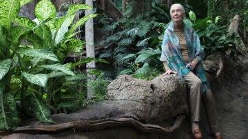 Jane Goodall Estamos viviendo la sexta extincion masiva de especies causada por nosotros