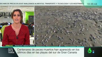 Aparecen centenares de peces muertos en las playas del sur de Gran Canaria