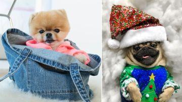 Perros instagramers