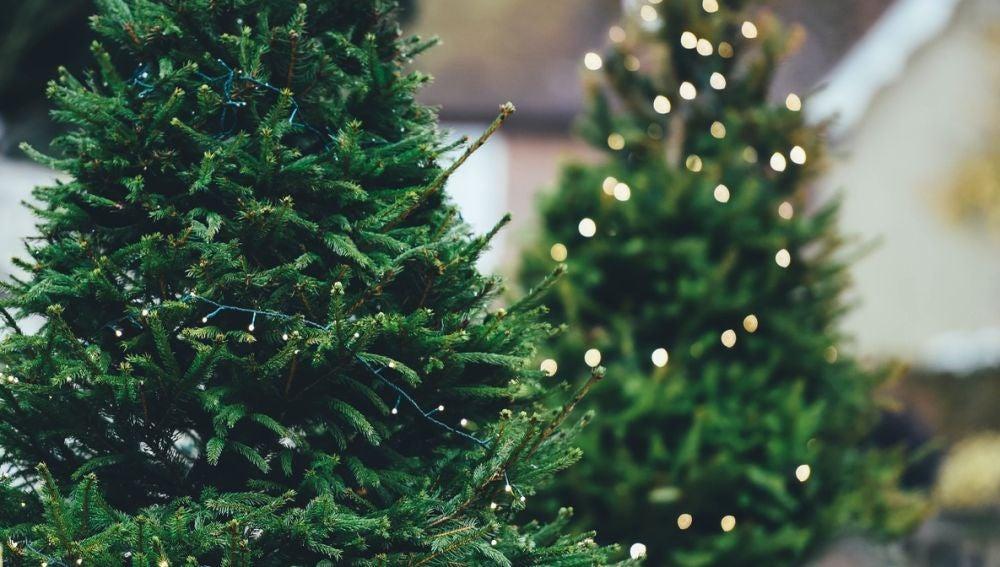 Con los árboles de Navidad tenemos que tener mucho cuidado, más aún si los cortamos nosotros mismos