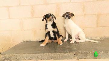 Prohibir la compra de cachorros: la medida de Reino Unido que podría acabar con el abandono tras la Navidad