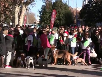 Imagen dela 'San Perrestre' de Madrid