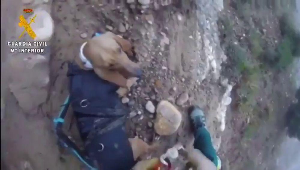 El impresionante rescate de la Guardia Civil de un perro que llevaba tres días atrapado en un barranco