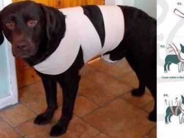 Imagen de un perro con una venda para evitar que se asuste con los fuegos artificiales