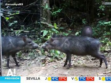 Animales mirándose al espejo en Brasil