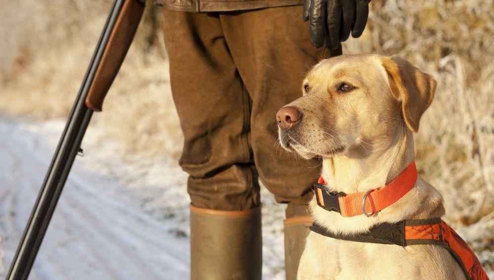 Imagen de archivo perro de caza