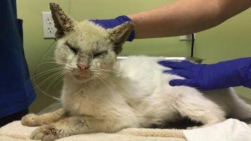 El gato Cotton tras ser rescatado.