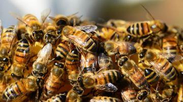 Colmena de abejas (Archivo)