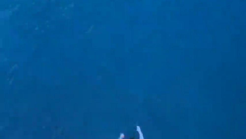 Una empresa de cruceros veta a un estadounidense por lanzarse desde el undécimo piso de uno de sus barcos