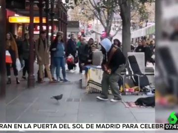 Al ritmo de 'Blurred Lines': así es el baile de la paloma que acompaña a un músico callejero