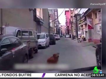 Un perro guía a una ambulancia hasta el lugar en el que está inconsciente su dueño