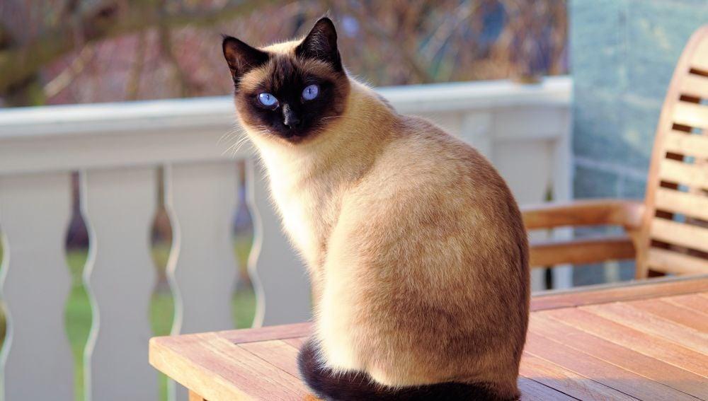 Al fin y al cabo, los gatos son como nosotros: los hay más huraños y los hay más amigables.