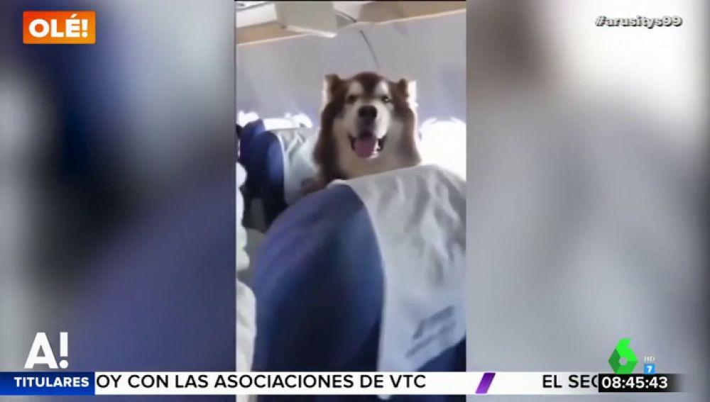 Un perro viaja en avión junto a su dueña con discapacidad para darle apoyo emocional