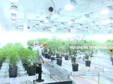 El cannabis moverá 2.000 millones de euros en sólo dos años: analizamos el auge de este negocio en Equipo de Investigación