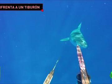 tiburon_jugones