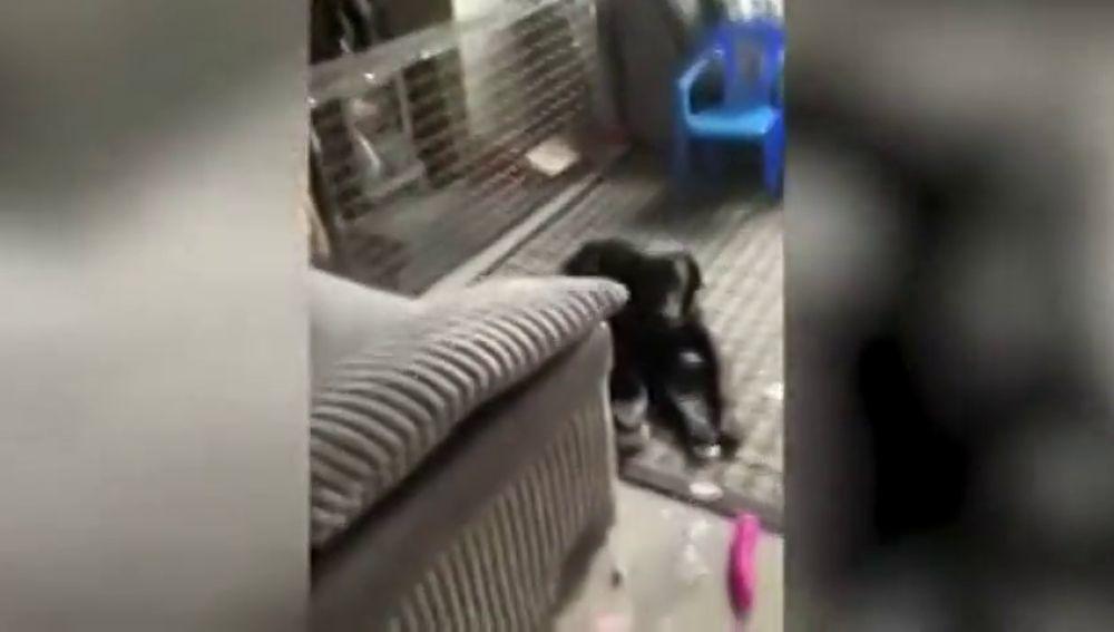 El desternillante momento en el que un perro rompe el paquete de un vecino y se pone a jugar con el vibrador que había dentro