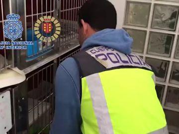 Desmantelan un criadero ilegal de chihuahuas y rescatan a 12 perros en una vivienda de Meco, Madrid