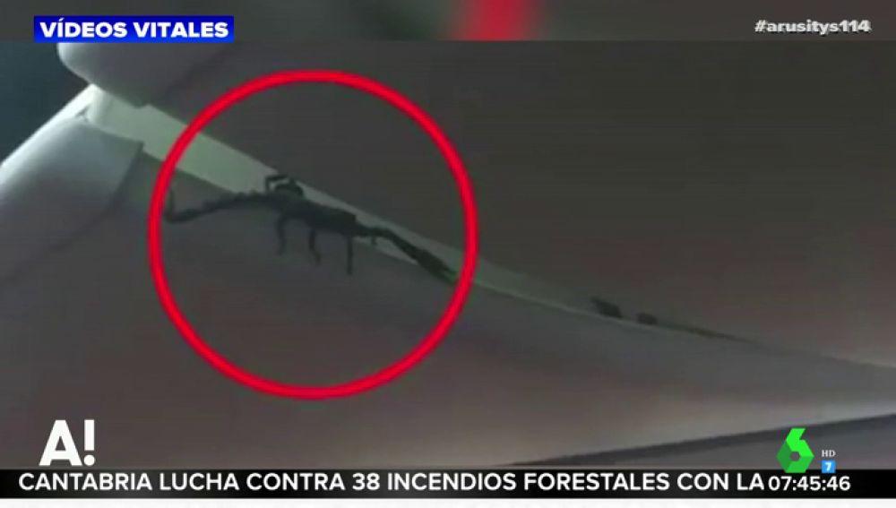 Graban a un escorpión saliendo del compartimento del equipaje de mano en un avión