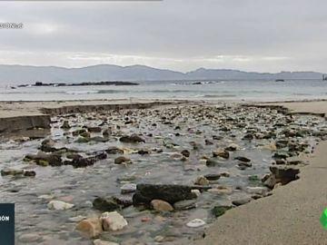 El debate de las playas artificiales: ¿Un ataque al ecosistema o un lugar más accesible?