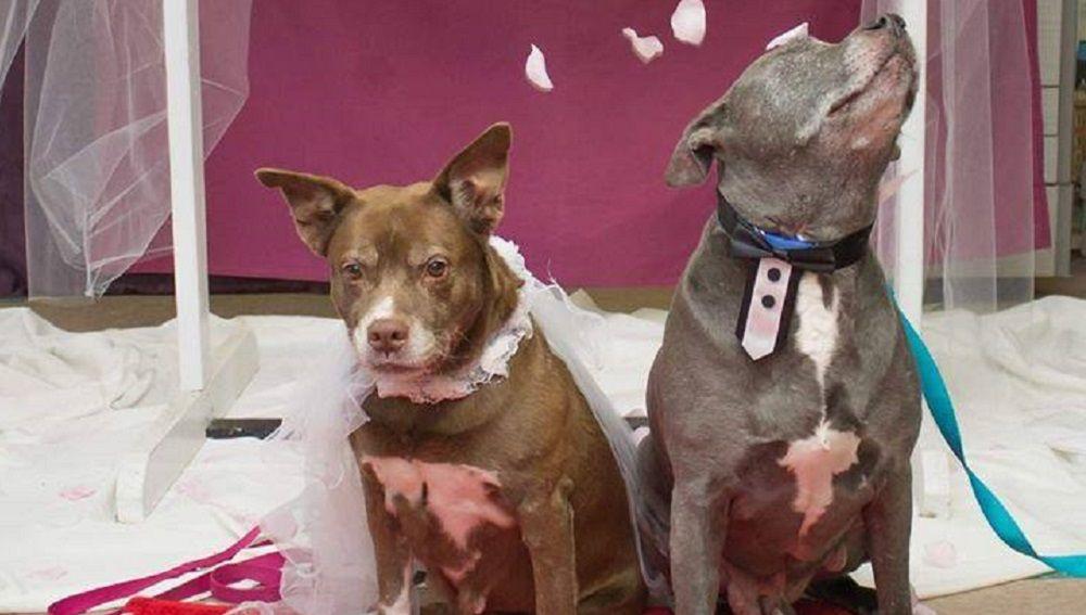 Imagen de los perros que se han casado para ser adoptados juntos