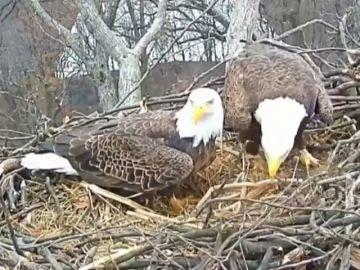 La ruptura amorosa de las águilas más famosas de Estados Unidos