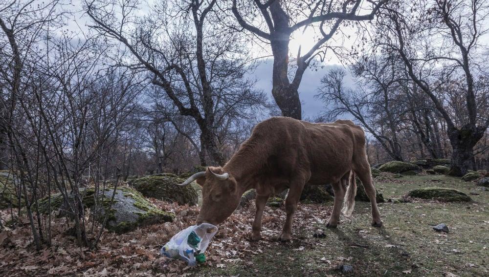 Los plásticos abandonados en el entorno pueden acabar en nuestro organismo.