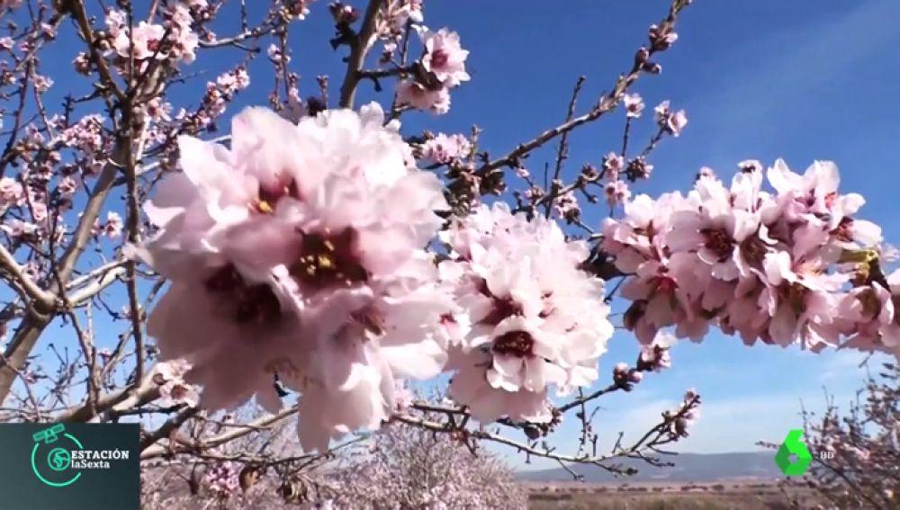 El cambio climático pone en peligro las cosechas valencianas: los almendros florecen un mes antes de lo habitual