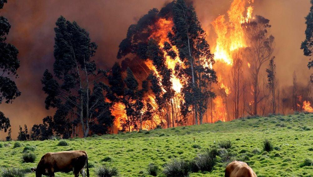 Incendios forestales en Asturias