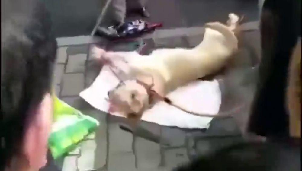 Impactante vídeo: una anciana apalea en plena calle a un perro vivo atado por las patas