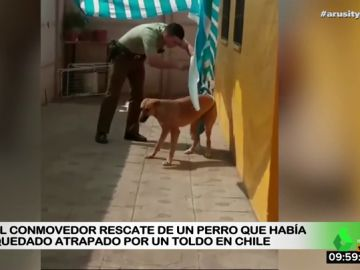 Rescate de un perro en Chile
