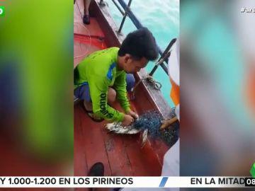 La increíble hazaña de unos pescadores para salvar a una tortuga atrapada entre unas redes