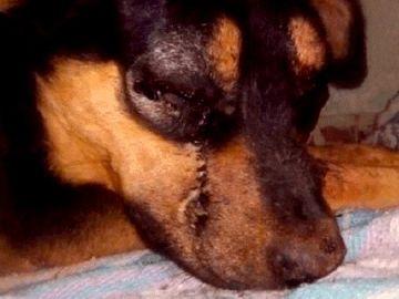 Dos adolescentes matan a golpes a un perro en México.