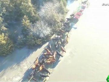 Animales ahogados, ciudades convertidas en islas, puentes destrozados... las terribles imágenes que deja el temporal en Estados Unidos