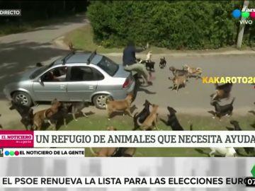 Una jauría de perros ataca a un periodista en pleno directo
