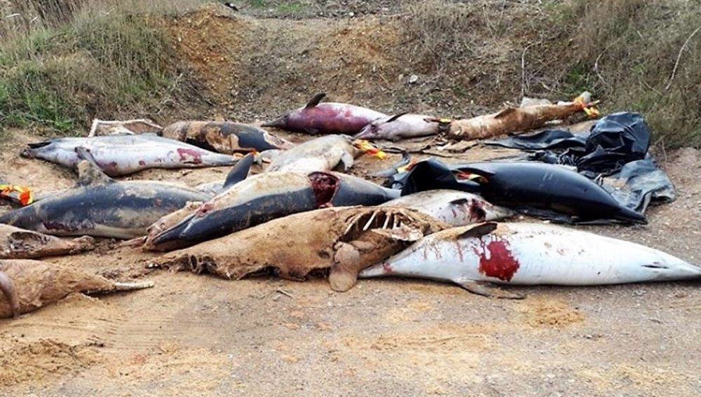 Delfines mutilados y apilados en una playa de Francia