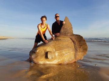El gigantesco pez luna varado en la playa australiana