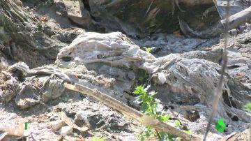 Imagen de vertidos en Arroyomolinos