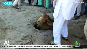 Rescatan a una vaca en la India