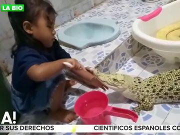 Así es el impactante vídeo de una niña cepillando los dientes a un cocodrilo que revoluciona las redes
