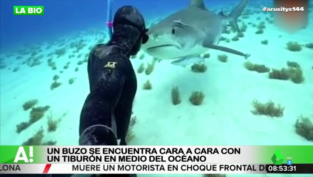 Esta es la sorprendente reacción de un tiburón tras encontrarse cara a cara con un buzo en medio del océano