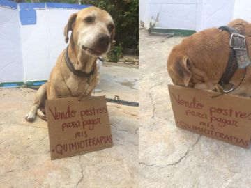 Deko, el perro que vende pastelitos para pagar su quimioterapia