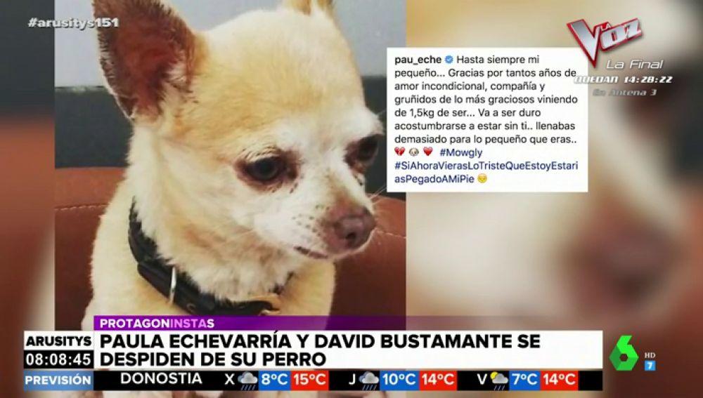 La emotiva despedida de Paula Echevarría y David Bustamante a su chihuahua Mogwli