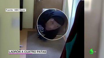 Una cámara de seguridad graba a un ladrón entrando en una casa por la puerta del perro