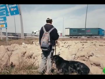 Frame de una película de la duodécima edición del festival Ecozine en Zaragoza