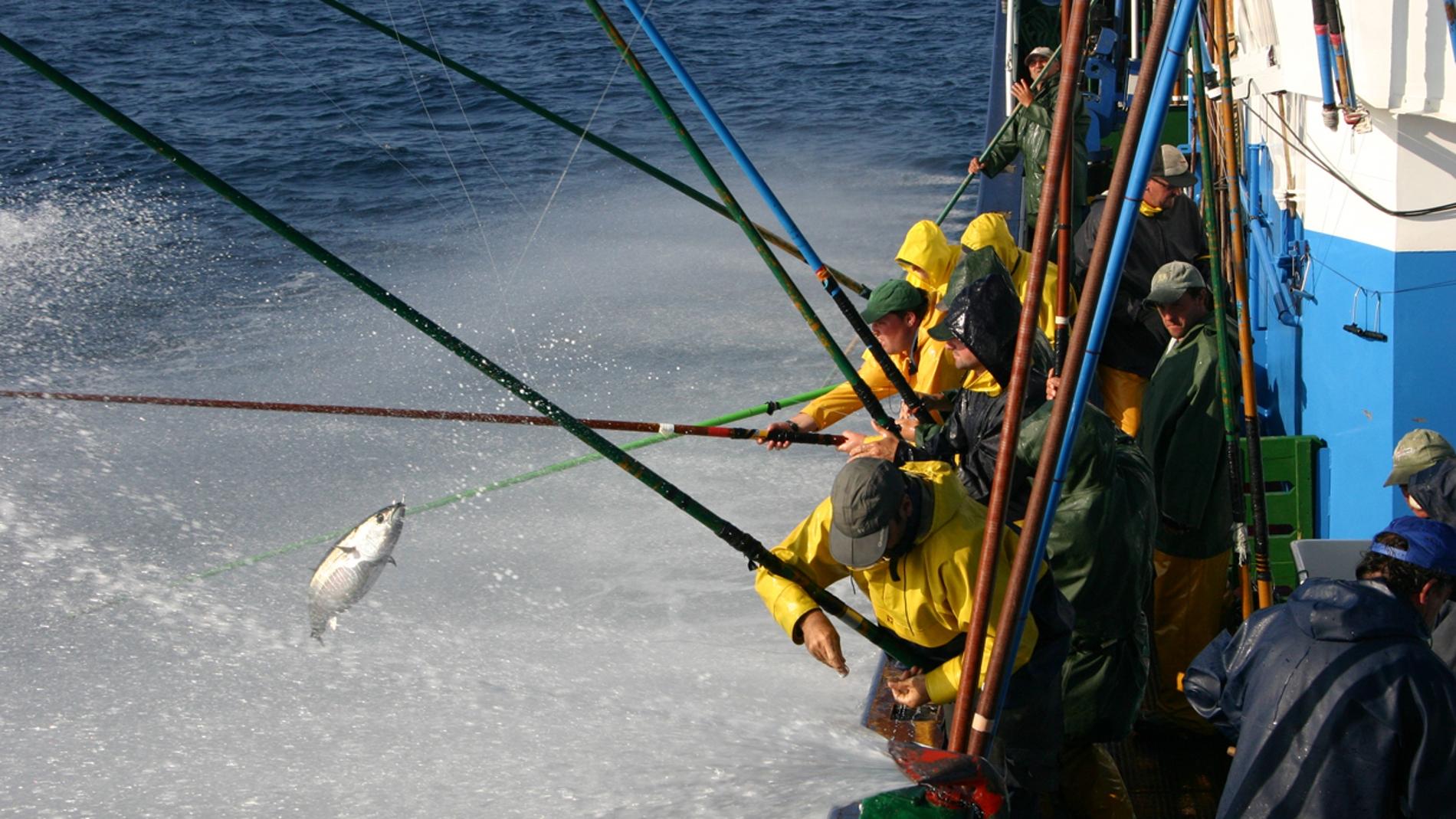 El cambio climatico redistribuira los atunes