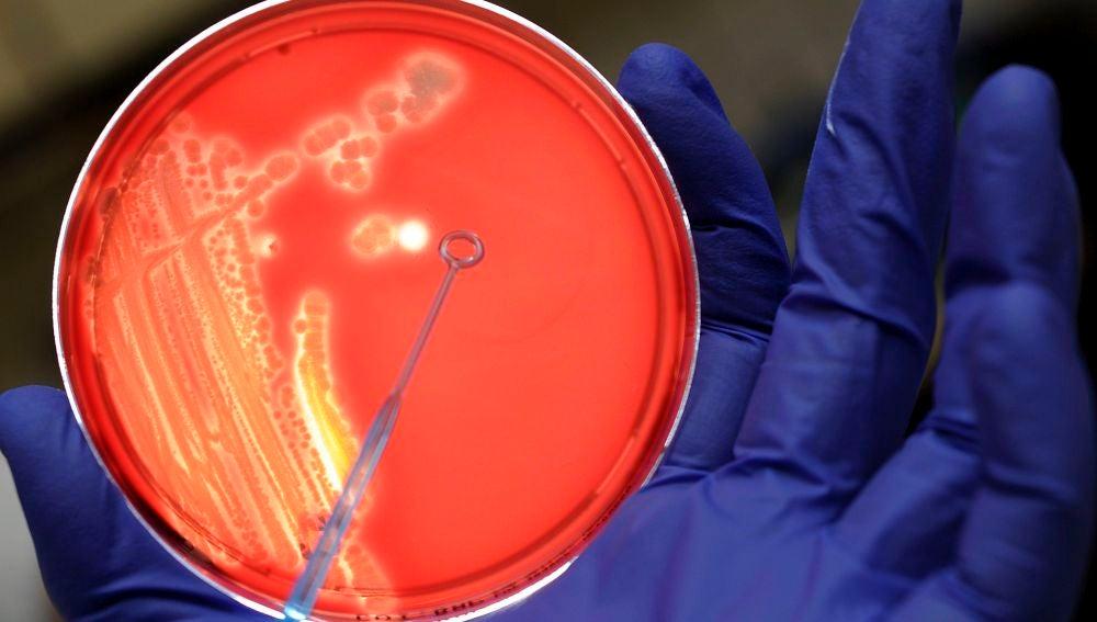 Diseñan una 'bomba genética programable' capaz de matar solo bacterias malas