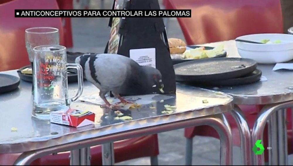 Cádiz recurrirá a anticonceptivos para controlar la invasión de palomas